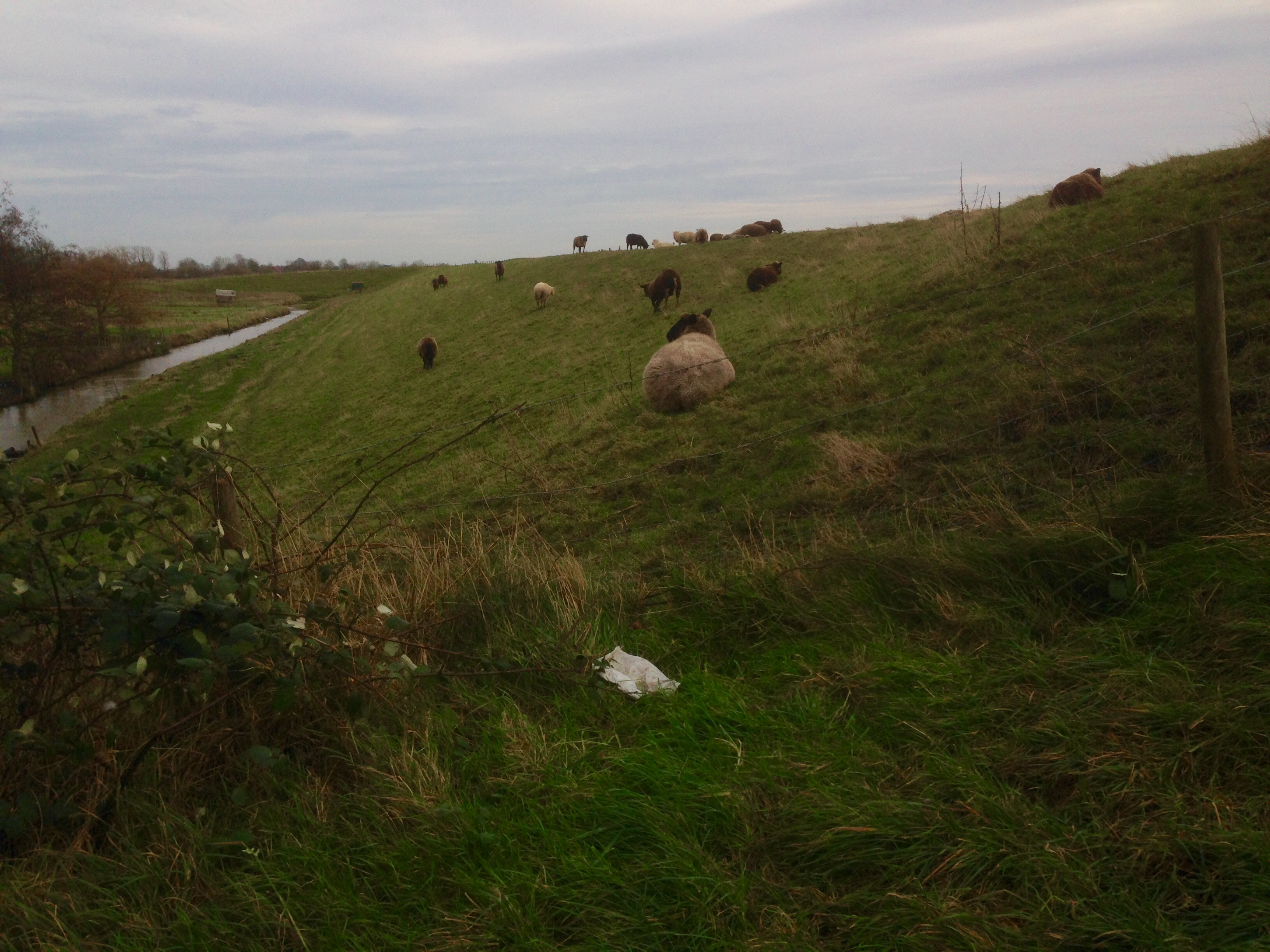 The sheep alongside the dike were more interested in staying out of the wind than chatting with foreigners.